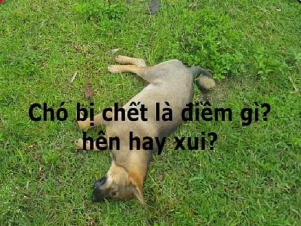Chó bị chết là điềm gì? Tốt hay xấu?