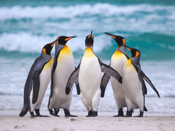 mơ thấy chim cánh cụt điềm gì