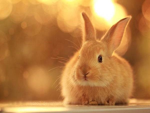 Nằm mơ thấy thỏ mang điềm báo tốt hay xấu?