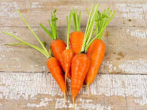 Mơ thấy củ cà rốt có điềm báo gì và đánh con gì trúng?