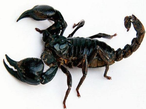 Mơ thấy bọ cạp có điềm gì và đánh con số nào trúng?