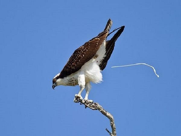 Phân chim rơi vào đầu có điềm báo gì? lành hay dữ?