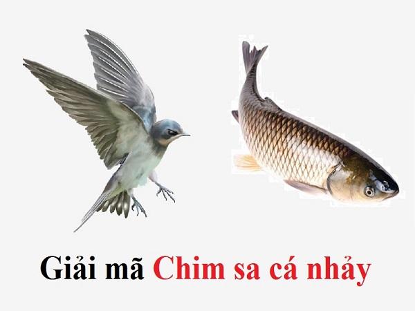 Chim sa cá nhảy là điềm báo gì?