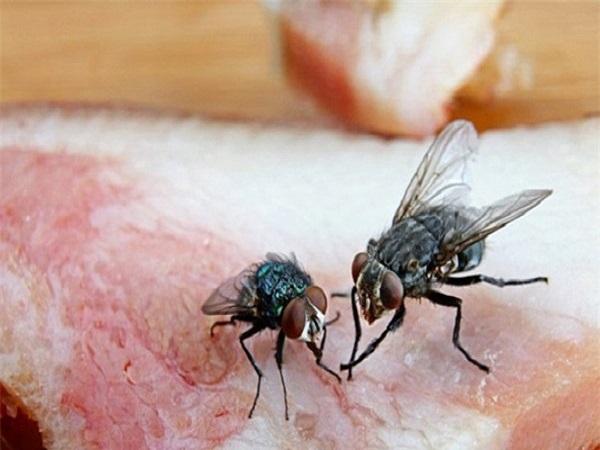 Mơ thấy con ruồi có điềm báo gì và đánh con số nào?