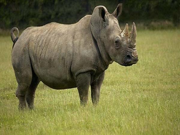Mơ thấy tê giác có điềm báo gì và chọn số nào trúng?